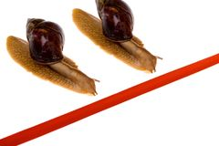 Snail race. Snail crawl towards red line Stock Photography