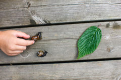 Snail race. Snails racing towards green leaf while kids helping them Royalty Free Stock Photo
