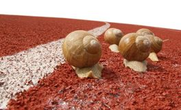 Snail on race track Stock Photo