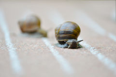 Snail Race- Which is faster? Stock Photography