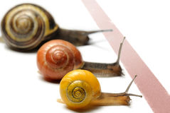 Snail racing Royalty Free Stock Photography