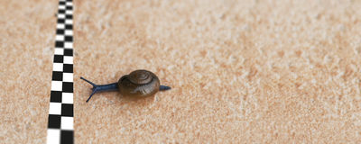 Snail racing. Concept near the finish line Stock Image