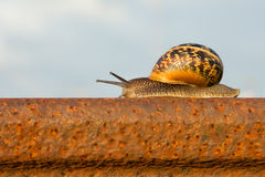 Snail on the rail. Snail On The rusty Rail and blue sky Royalty Free Stock Photos