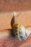 Snail on the rail. Close-up and blured background Stock Image