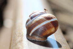 Snail, rail, and spider - very unusual composition Royalty Free Stock Image