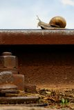 Snail on a railway rail Stock Images