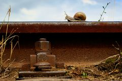 Snail on a railway rail Royalty Free Stock Photo