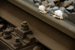 Snail on the railway. Two snail on the railway Royalty Free Stock Images