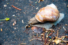 Snail after rain Stock Photos