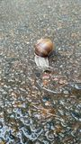 Snail. After rain stock photography