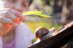 Snail in the rain. Woman offering shelter from the rain with a leaf to a snail Royalty Free Stock Photography