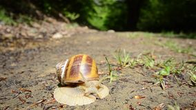 Snail after rain Royalty Free Stock Photos