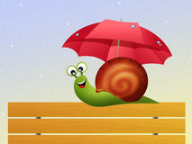 Snail in the rain Royalty Free Stock Photography