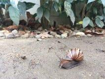 Snail. After rainy Royalty Free Stock Photos