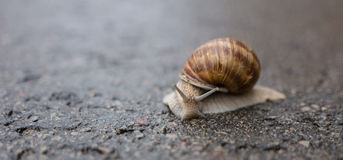 Snail on a rainy day. A snail on rainy day, a closeup Stock Photo