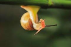 Snail. The rainy season snails everywhere the backlighting is very beautiful Royalty Free Stock Photography