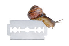 Snail on razor. Isolated on white background Royalty Free Stock Photos