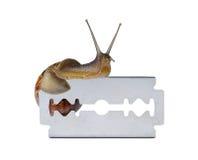 Snail on razor. Isolated on white background Stock Photography