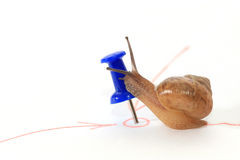 Snail reaching the goal and kiss the target. Royalty Free Stock Photo