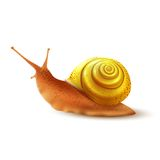 Snail realistic isolated. Colored small snail mollusk realistic on white background vector illustration Stock Photos