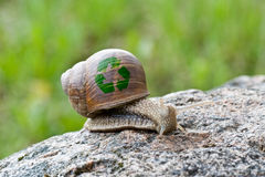 Snail with recycle symbol. Crawling in nature on stone Royalty Free Stock Images