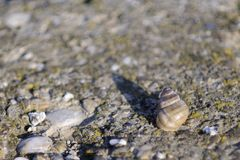 Snail resting Royalty Free Stock Photo