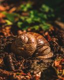 Snail resting in a forest royalty free stock images