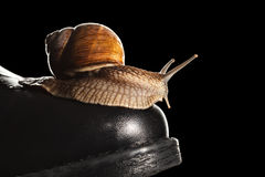 Snail riding boot Stock Image