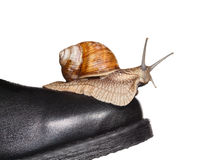 Snail riding boot Royalty Free Stock Images