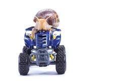 Snail riding a quad Stock Photo