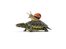Snail Riding on a Turtle Stock Images