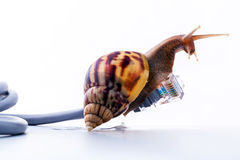 Snail with rj45 connector symbolic photo for slow internet connection. broadband connection is not available everywhere. stock photography