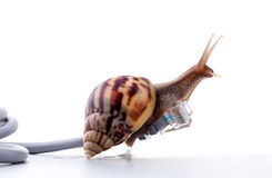 Snail with rj45 connector symbolic photo for slow internet Stock Images