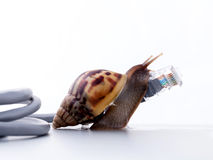 Snail with rj45 connector symbolic photo for slow internet. Connection. broadband connection is not available everywhere royalty free stock photography