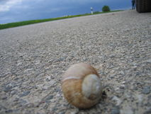 Snail on the road. A small snail traveling on the road Stock Photography