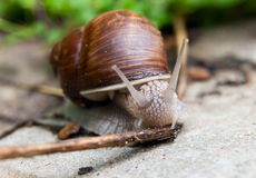 Snail on the road Stock Image