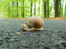Snail. A snail on the road Stock Photo