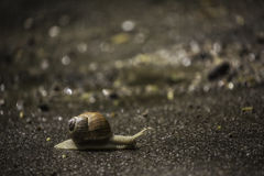 Snail is on the road Stock Photography