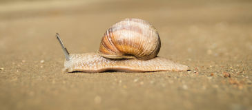 Snail on the road Royalty Free Stock Images