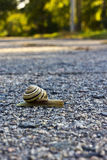 Snail on road. Snail crawling on the asphalt road royalty free stock photography