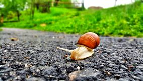 Snail on road stock photography