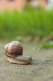 Snail on road. Slow snail travel on road Stock Image