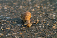 Snail on the road Royalty Free Stock Photos