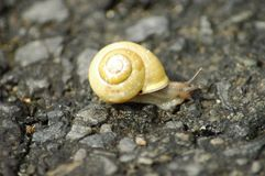 Snail on the road. Smal snail on the road Stock Images