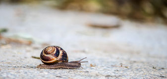 Snail on the road. In sunlight Stock Photography