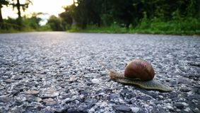 Snail at the road stock photography