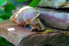 Snail. On a rock in the backyard Royalty Free Stock Photos