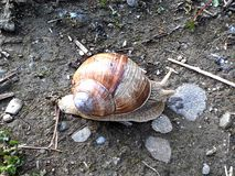 Snail. Rock, day, house, small Royalty Free Stock Photography