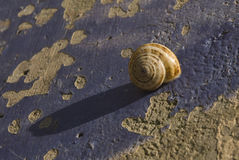 Snail. On the rock with its shadow Royalty Free Stock Photo
