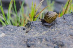 Snail on Rock. A small snail creeps along a rock along the Appalachian Trail stock photography